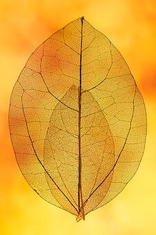 Hojas naranjas transparentes con luz de fondo amarilla