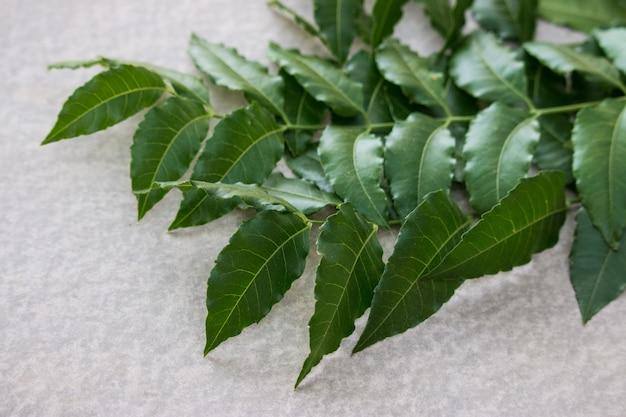 Hojas de neem utilizadas como medicina ayurvédica.