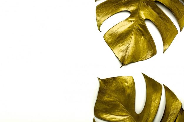 Hojas de oro del miltiple de monstera aisladas sobre fondo blanco