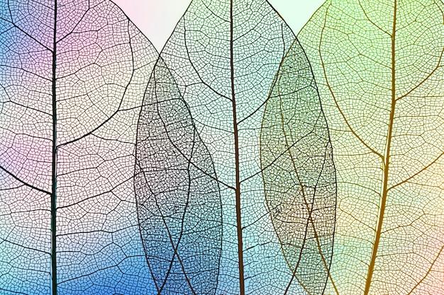 Hojas de otoño abstractas vibrantes