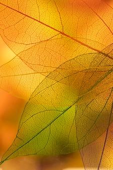 Hojas de otoño con amarillo y naranja.