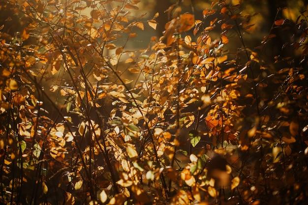 Hojas de otoño anaranjadas en luz dorada suave
