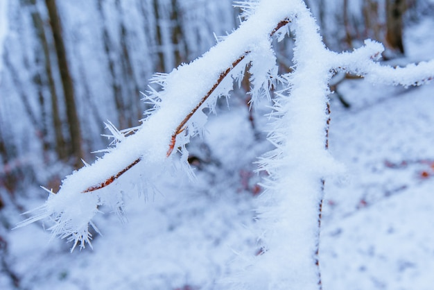 Hojas de otoño en un árbol en la nieve.