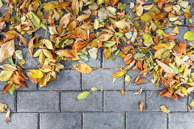 Hojas de otoño caídas yacen sobre el pavimento de adoquines fondo natural de follaje colorido
