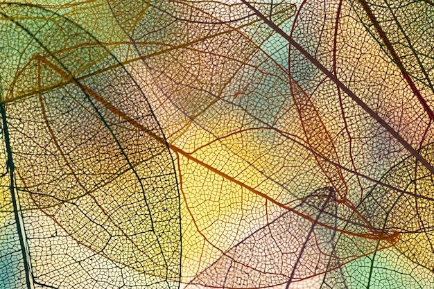 Hojas de otoño color abstracto
