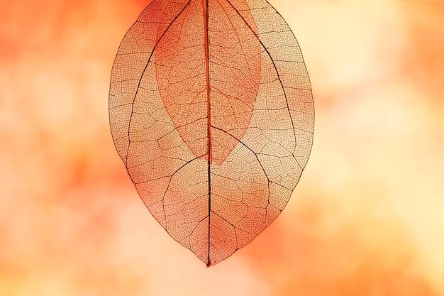 Hojas de otoño de color naranja vibrante