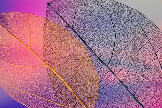 Hojas de otoño de colores abstractos vibrantes