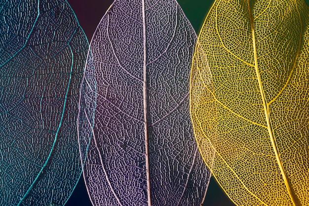 Hojas de otoño coloridas abstractas
