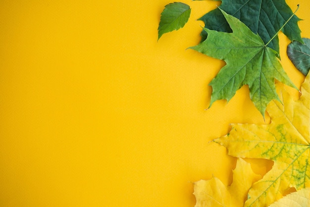 Hojas de otoño coloridas sobre un fondo amarillo