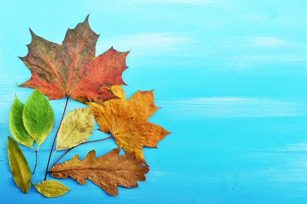 Hojas de otoño coloridas sobre fondo de madera azul