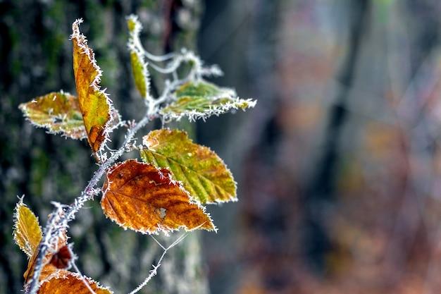 Hojas de otoño cubiertas de escarcha en el bosque sobre un fondo oscuro