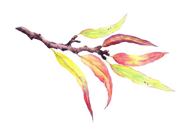 Hojas de otoño decorativas abstractas en rama. acuarela