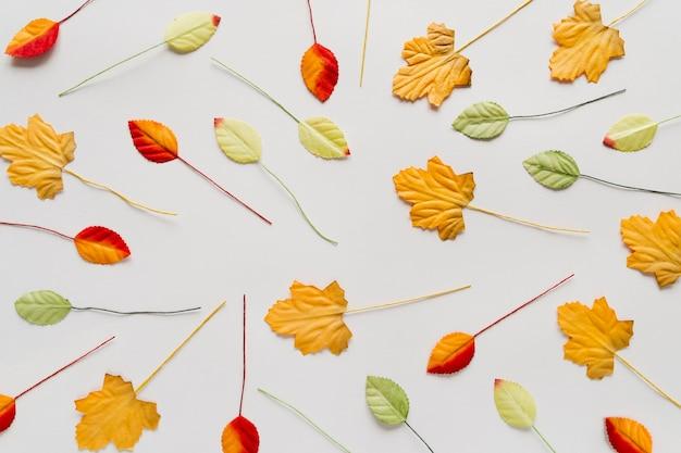 Hojas de otoño dispersas sobre fondo blanco