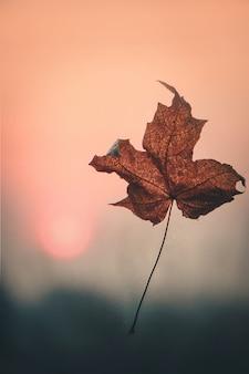 Hojas de otoño y un libro. enfoque selectivo