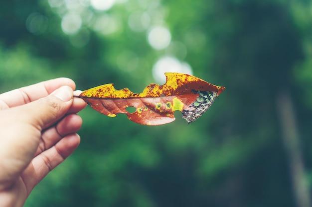 Las hojas de otoño en las manos de niña, imagen de filtro vintage