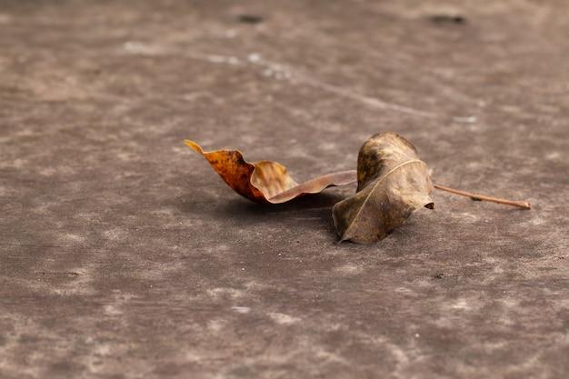 Hojas de otoño en mesa de madera