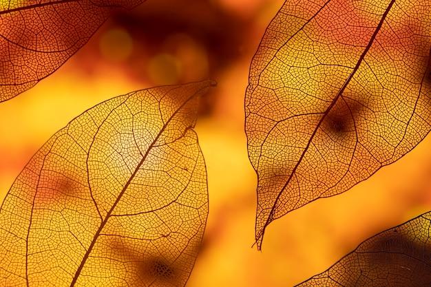Hojas de otoño naranjas abstractas vívidas