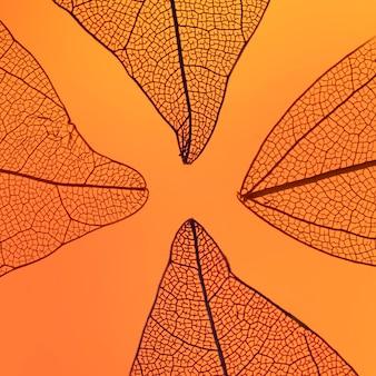 Hojas de otoño naranjas abstractas