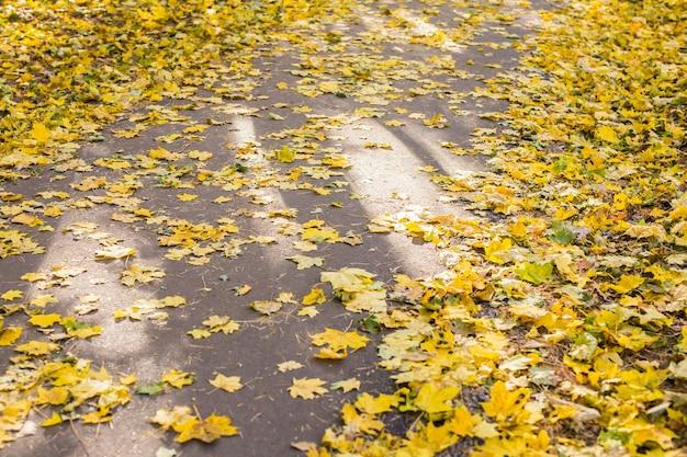 Hojas de otoño naranjas y amarillas sobre asfalto.