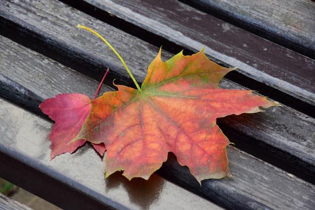 Hojas de otoño naranjas y rojas se encuentran en un banco de madera en el parque