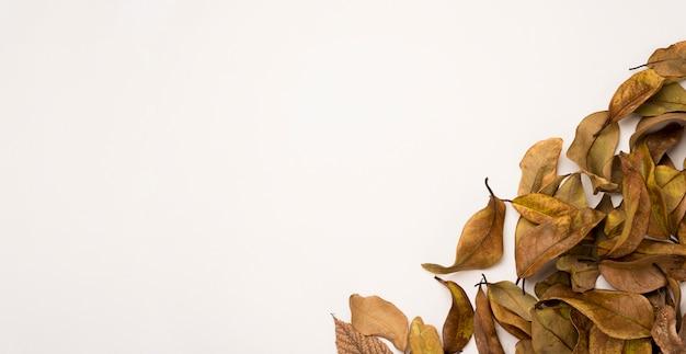 Hojas de otoño naturales con espacio de copia