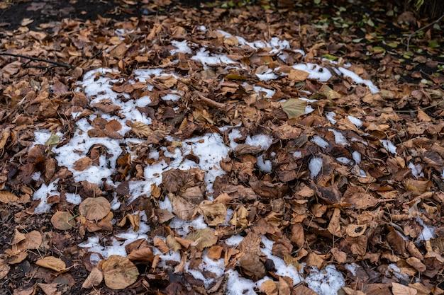 Hojas de otoño y nieve caída