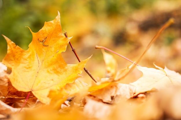 Hojas de otoño en el parque