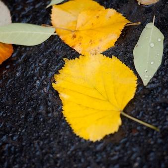 Hojas de otoño en el pavimento en central park manhattan, nueva york, estados unidos