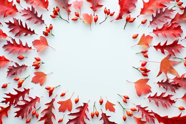 Hojas de otoño, planas en tonos rojos y naranjas sobre fondo blanco. hojas de roble rojo y amarillo y escaramujo.