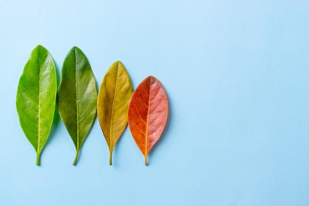Hojas de otoño rojas, naranjas y rojas