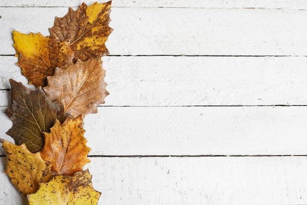 Hojas de otoño sobre fondo blanco de madera con espacio de copia