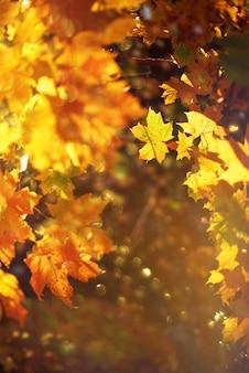 Hojas de otoño sobre fondo soleado