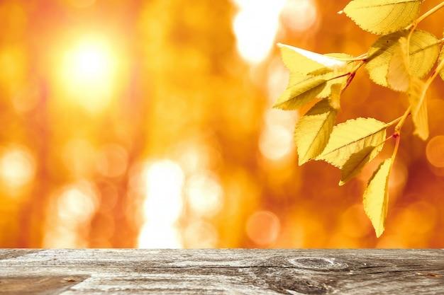 Hojas de otoño en el sol