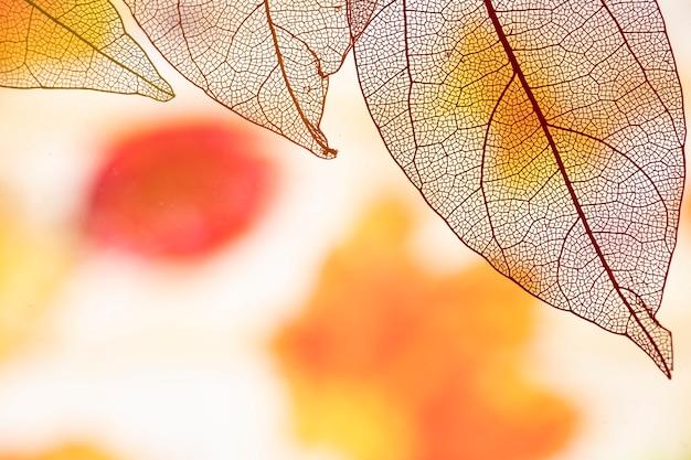 Hojas de otoño transparentes abstractas