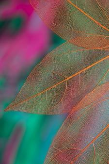 Hojas de otoño transparentes de colores vivos
