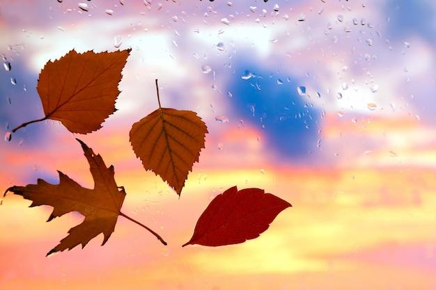 Hojas de otoño en una ventana mojada en un tiempo lluvioso
