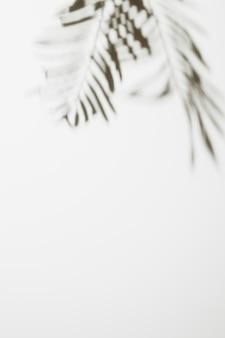 Hojas de palma borrosas aisladas sobre fondo blanco