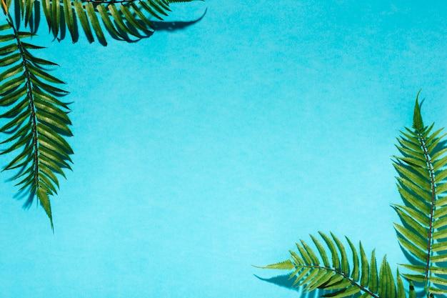 Hojas de palma decorativas en superficie colorida