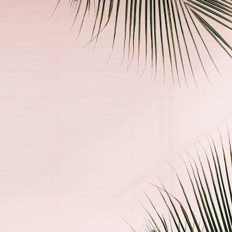 Hojas de palma frescas sobre fondo rosa
