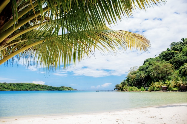 Hojas de palma en el mar en verano.
