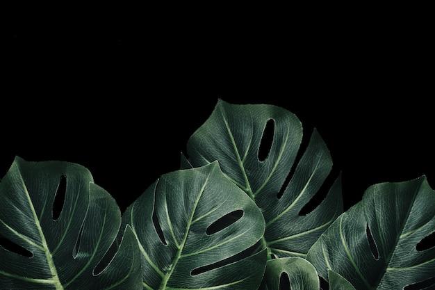 Hojas de palma de monstera en el bosque tropical dramático y copie el espacio para carteles o invitaciones.