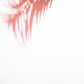 Hojas de palma rojas borrosas aisladas en el fondo blanco