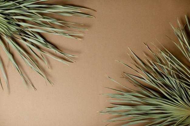 Hojas de palma secas sobre fondo de papel artesanal. frescura de primavera.