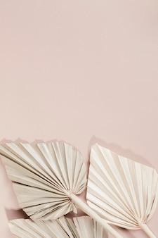 Hojas de palma secas sobre un fondo rosa