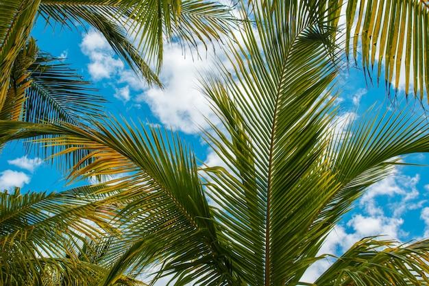 Hojas de palma sobre fondo de cielo azul
