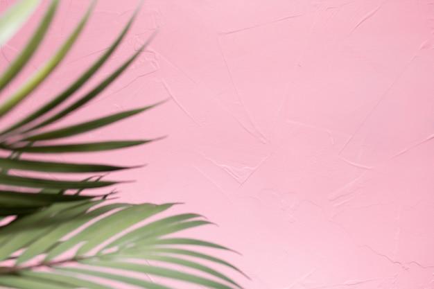 Hojas de palma sobre fondo rosa