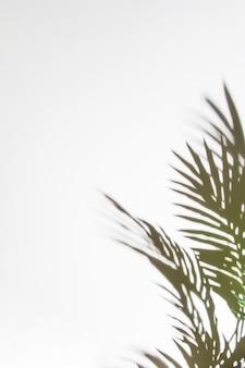 Hojas de palma sombras aisladas sobre fondo blanco
