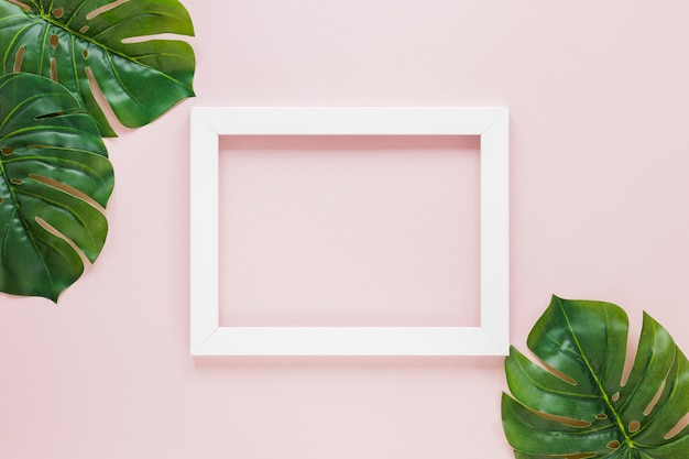 Hojas de palma verde con marco en blanco