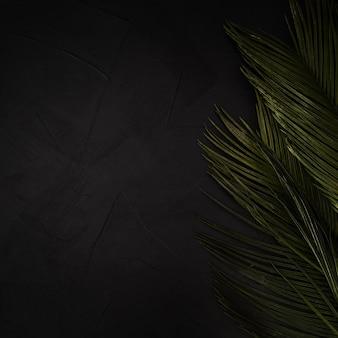 Hojas de palma verdes en fondo texturizado negro con el espacio de la copia.