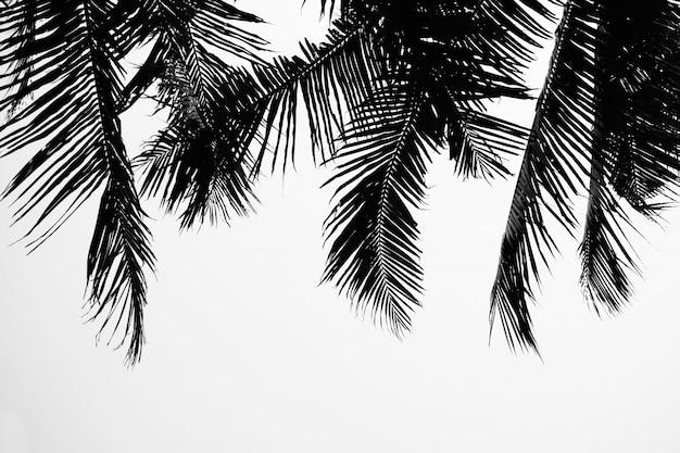 Hojas de palmera aisladas en blanco pálido.